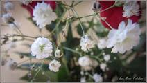 Photo: Floarea miresei (Gypsophila paniculata) - De pe Calea Victoriei, piata de flori - 2016.09.17 Album: http://ana-maria-catalina.blogspot.ro/2016/10/floarea-miresei-gypsophila-paniculata.html