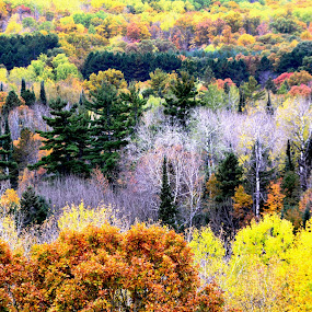 Scenic North Woods by Beth Bowman - Landscapes Forests (  )