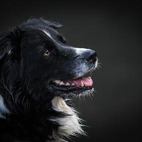 Paula by Mathias Ahrens - Animals - Dogs Portraits