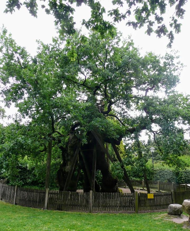 Internationaler Tag des Baums - dkp-rheinland-westfalen.de