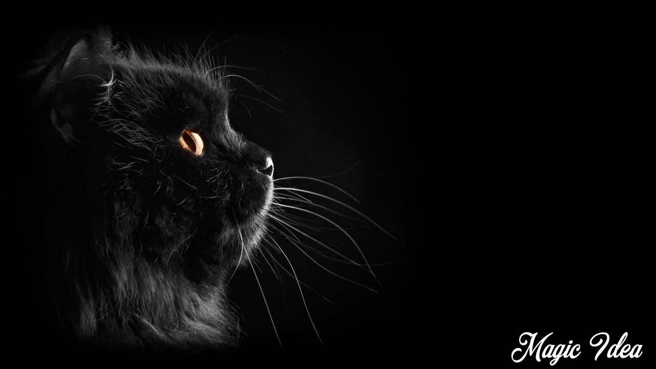 black cat wallpaper android apps on google play
