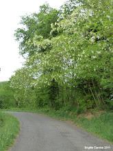 Photo: les acacias sont en fleurs...