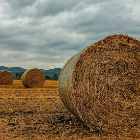 Bales by Marko Dragović - Landscapes Prairies, Meadows & Fields ( field, summer, bales, harvest )