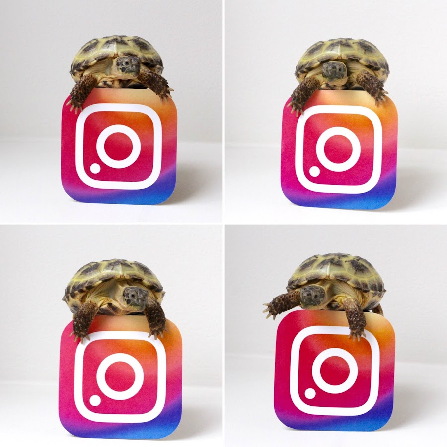 How to be so distractingly cute that no one notices the Instagram logo is upside down!