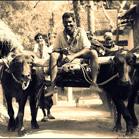 Bullock Cart by Indrajit Bhattacharya - Novices Only Portraits & People
