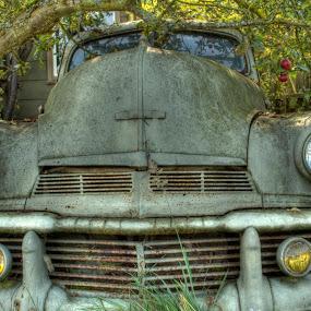 42 Olden Apple by Dana Styber - Transportation Automobiles