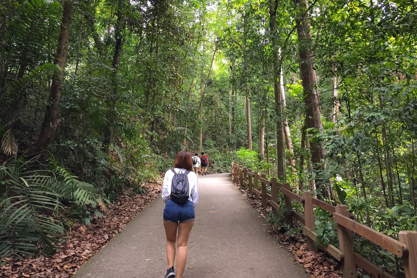 Bukit Timah slope