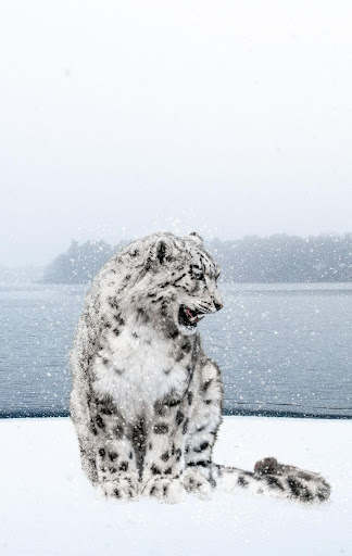 Snow Leopard Wallpaper HD : backgrounds & themes ss2
