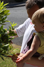 Photo: Holly and Daddy went out to the front garden to pick some bay leaves for the pasticcio