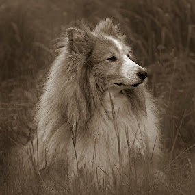 by Allan Wallberg - Animals - Dogs Portraits (  )