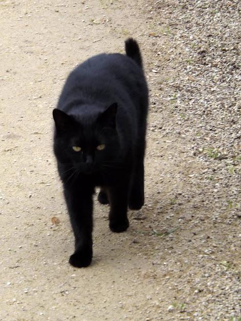 Chat noir - Tous droits réservés