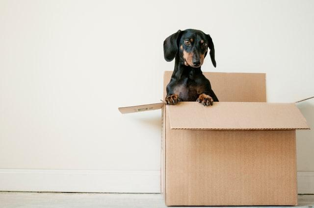 Keeping Your Kids and Pets Safe on Moving Day (1).jpg