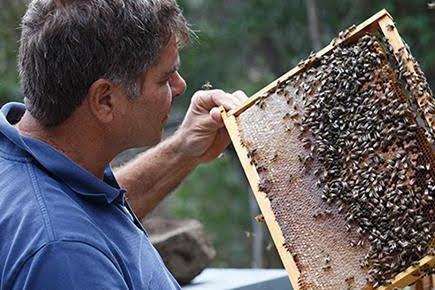 Carlo Amodeo apicultore