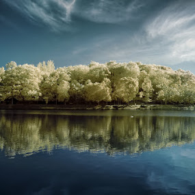 Yellow trees by AbuIrfan Outdoorgraphy - Landscapes Waterscapes