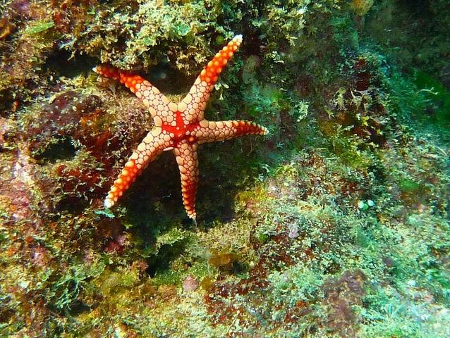 Photo: Etoile de mer en Nouvelle-Calédonie