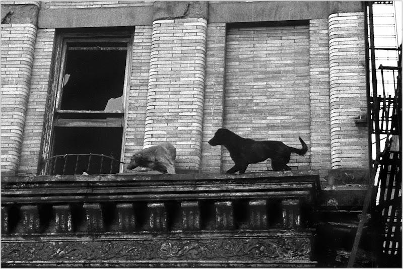 Photo: Living on the ledge 1989