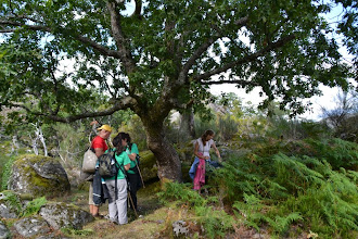 Photo: De tant en tant, algun arbre s'ha salvat de la masacre