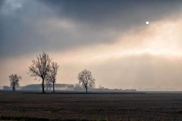 Se tu vedrai sol chiaro, sia marzo come gennaio. di Concetta Caracciolo