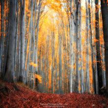 Photo: Hope Fall Eternal