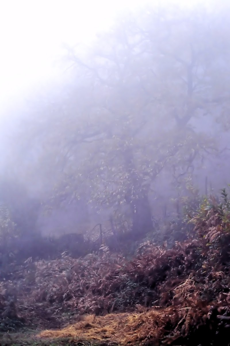 dentro la nebbia di ruggeri alessandro