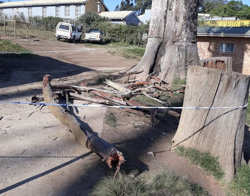 Pupil dies, two others injured as gumtree branch falls on them at school