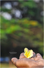 Photo: Ramalakshmi [not for the contest]