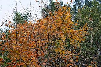 Photo: 去年都沒去賞楓,大多數楓葉都已掉落,居然在這還能看見橘色楓葉