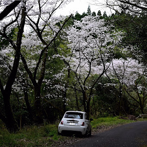 アバルト 595  ABARTH595 turismo @ 2014のカスタム事例画像 れぐさんの2020年03月31日23:02の投稿