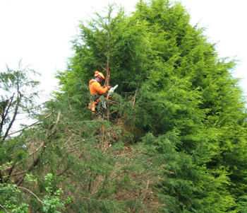 tree felling worcester