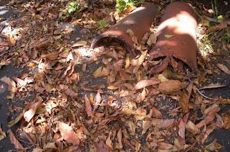 Photo: Leaves in deadfall Santa Barbara, 2012.