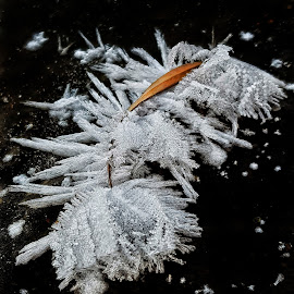 Winter Meets Fall by Lola Kay - Nature Up Close Other Natural Objects ( #micro #closeup #winter #snowflake #snow #leaf #nature )