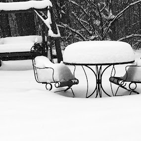Another Winter  by Debra Rebro - Black & White Objects & Still Life