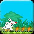 Bunny Carrots Skatter Run