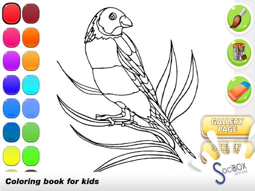 鸚鵡圖畫書