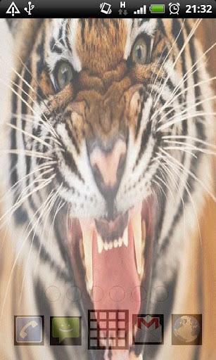 All Animals Live Wallpaper