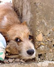 Photo: street dog, havana. Tracey Eaton photo.