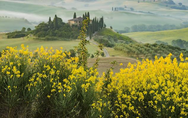Anche se il giallo degli alberi cede al peso del tempo, veste per un attimo le colline di luce. di Patrizio