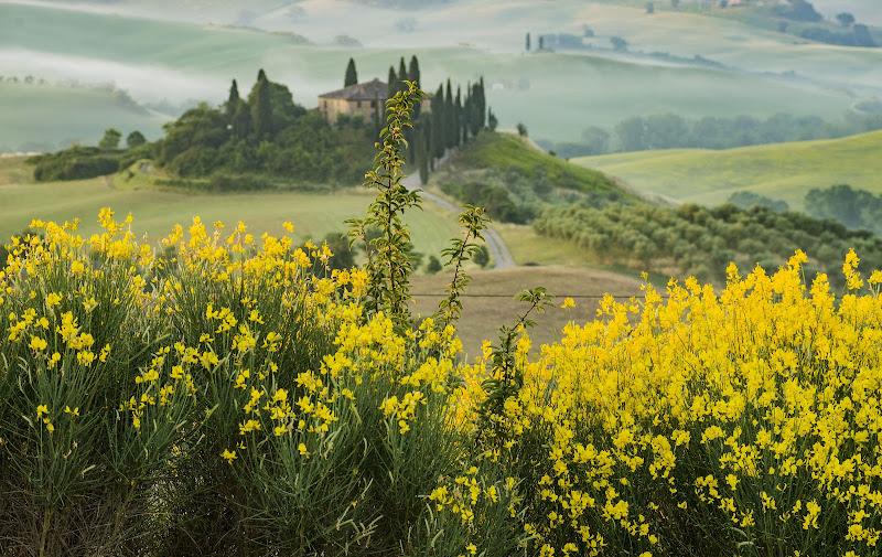 Anche se il giallo degli alberi cede al peso del tempo, veste per un attimo le colline di luce. di Patribi