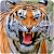 Tiger Wallpapers file APK for Gaming PC/PS3/PS4 Smart TV