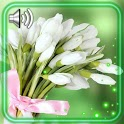 Snowdrops Bouquet Live Wallpapar icon