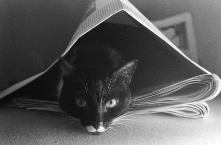 Cat under the journal di Giorgio_23