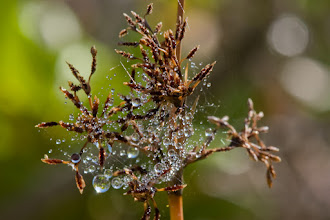 Photo: Spider web after rain