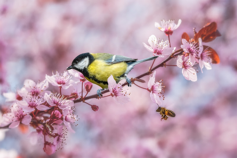 Spring is in the air... di Sara Jazbar