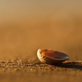 At the beach by Peter Samuelsson - Nature Up Close Sand