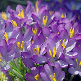 by Deanna Clark - Flowers Flower Gardens (  )