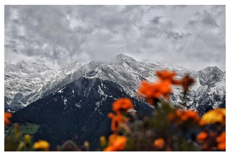 Roccia, fiori e neve di Tonio-marinelli
