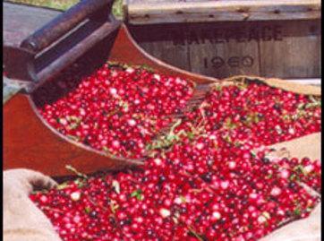 Use fresh cranberries.