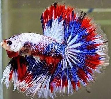 Ornamental fish culture android apps on google play for Ornamental fish