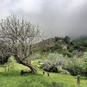 Hiking on Monte Carmo by Fabio Ferraro - Instagram & Mobile iPhone ( mountain, carmo, liguria, landscape, hiking )