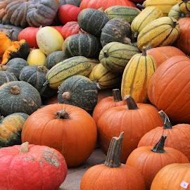 many pumpkins by Carola Mellentin - Food & Drink Fruits & Vegetables (  )